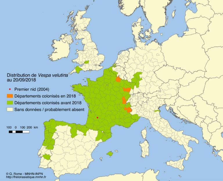 Frelons asiatiques, nid - Insectarium de Lizio, parc zoologique des petites bêtes en Bretagne.