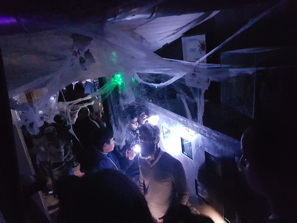Soirée Halloween, Insectarium de Lizio, parc zoologique des petites bêtes en Bretagne.