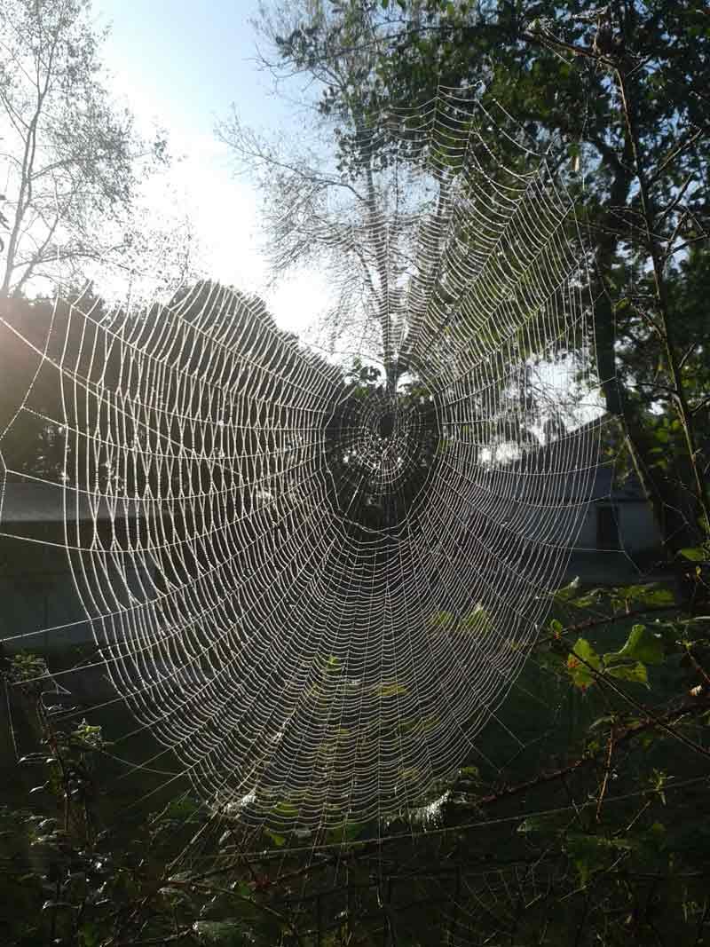 Toile d'araignée, Insectarium de Lizio, parc zoologique des petites bêtes en Bretagne.